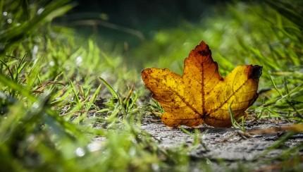 relatiegeschenken in de herfst