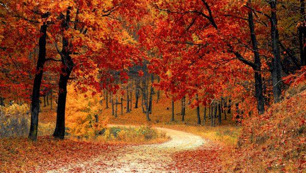 relatiegeschenken herfst