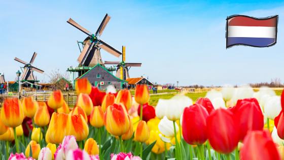 Quiz ik hou van holland
